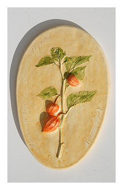 Physalis (Amour en cage )